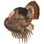 Dave Smith Decoy Strutter Decoy